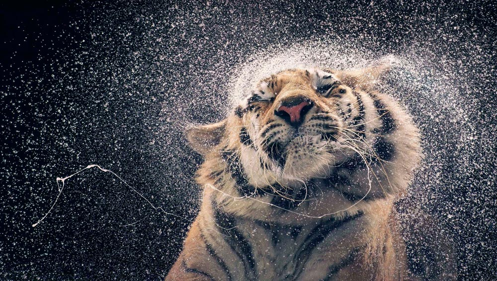 Image by Tim Flach