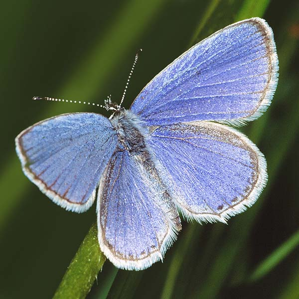 Macro Photograph of butterfly