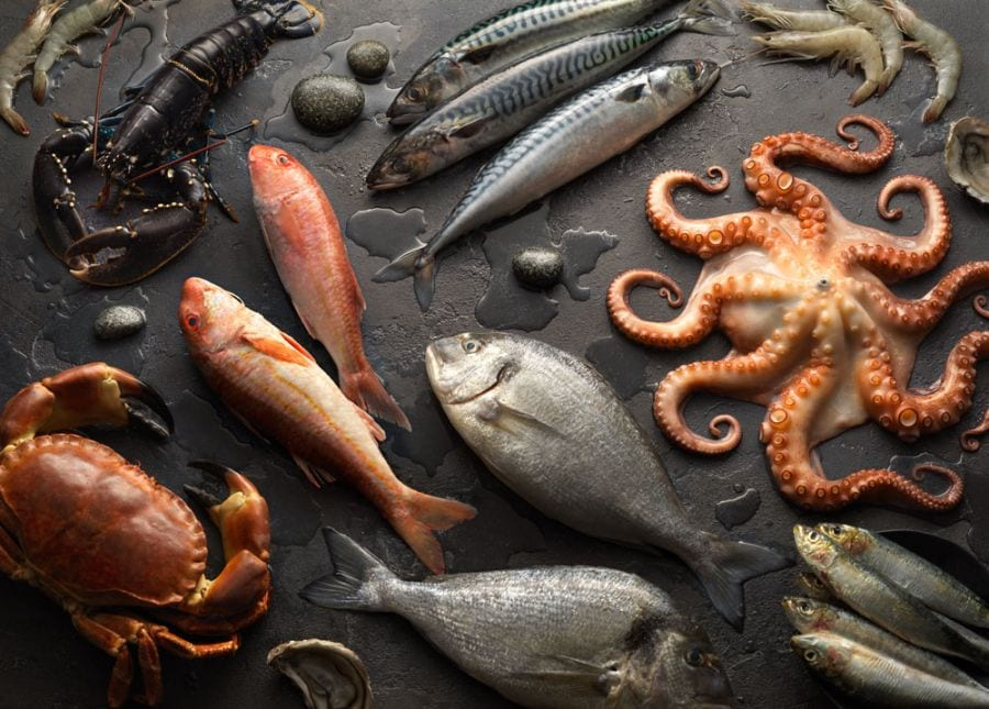 Fresh fish food photography