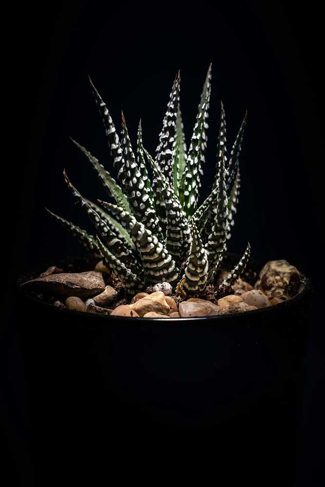 Pot plant photograph by Brian Stricker
