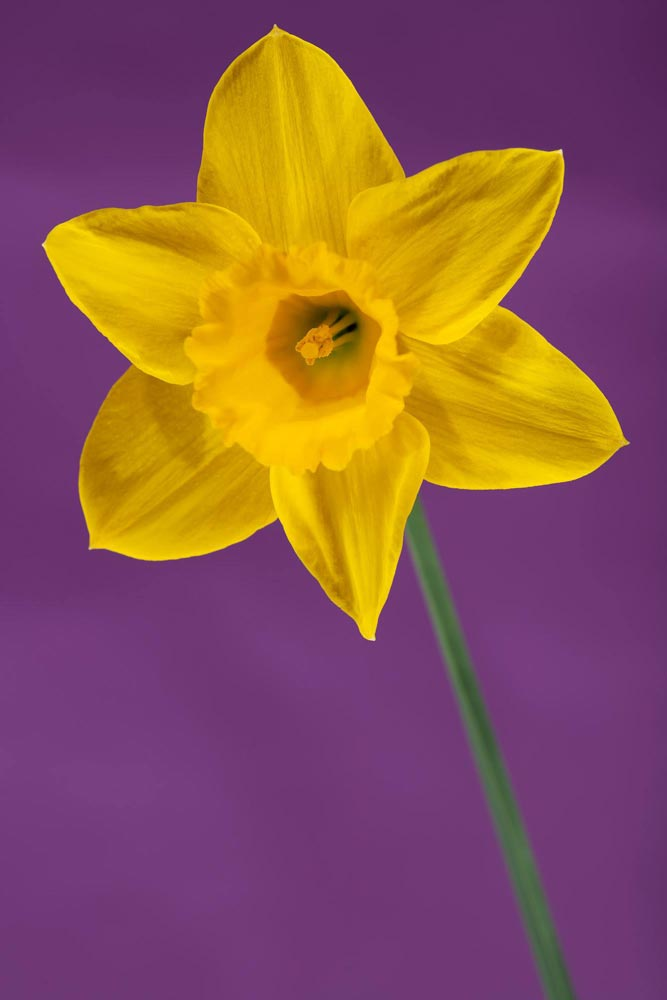 A flower photograph by Paul Smith