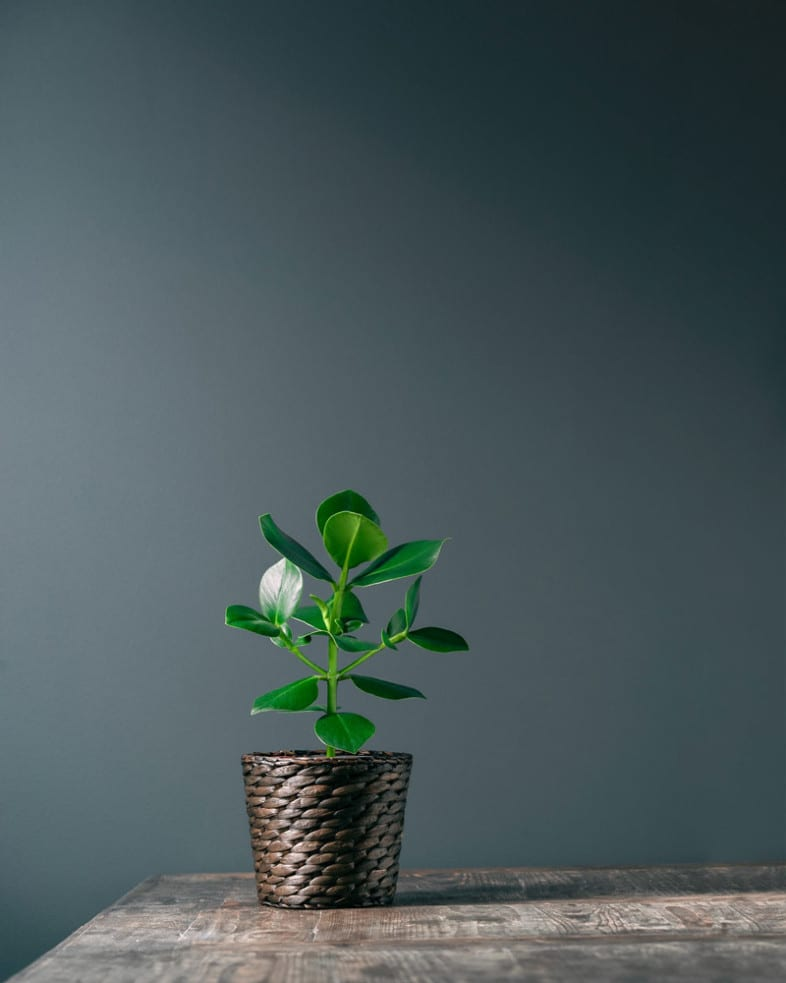 Pot plant photograph by Ruben Waage Ropstad